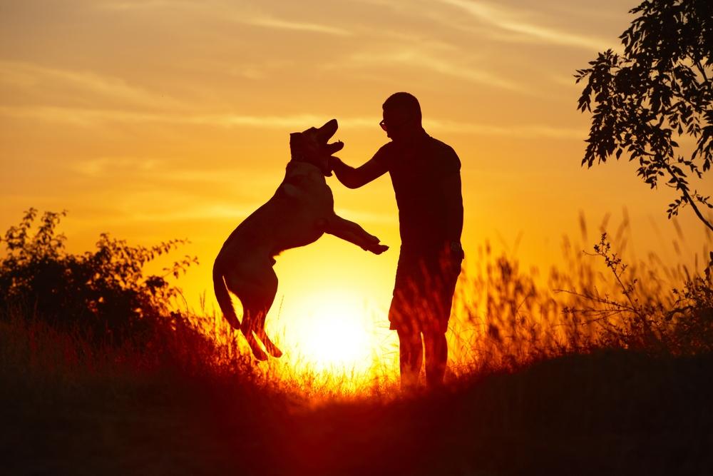 ¿Cómo nos ayudan en nuestro estado anímico los animales?